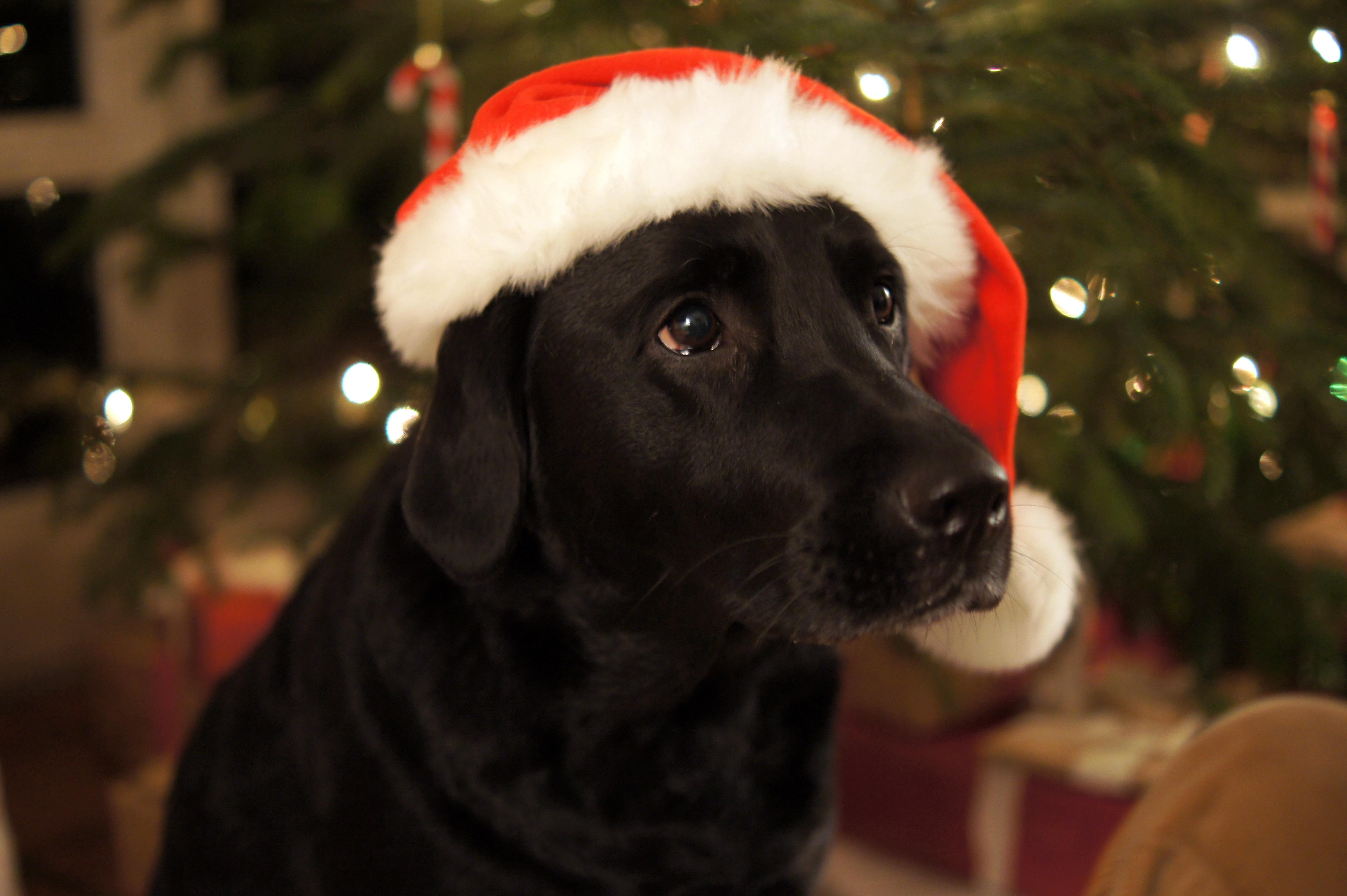 Süße Weihnachtsbilder.Merry Christmas Scrapimpulse
