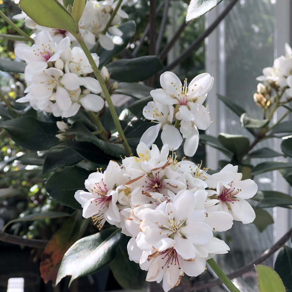 Scrap-Impulse Dienstags-Links Blumen Botanischer Garten München