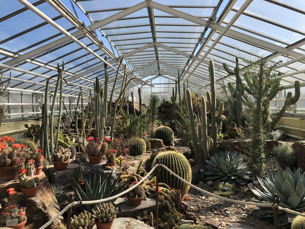 Botanischer Garten Nymphenburg Kakteenhaus